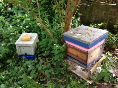 Some of Camilla's hives in Brockley