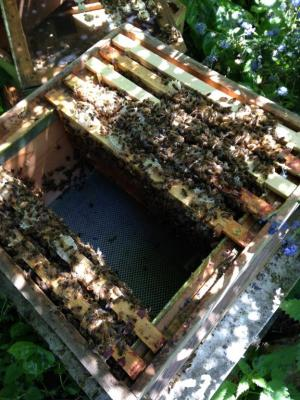Inside one of Camilla's hives