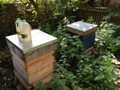 More of Camilla's hives